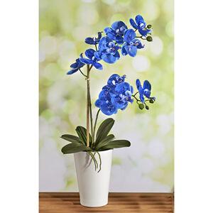 Magnet 3Pagen Modrá orchidea